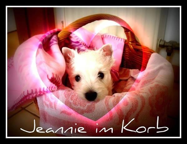 Jeannie_Korb