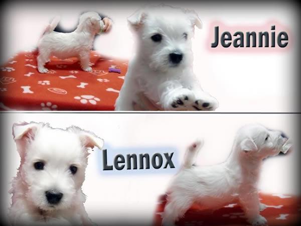 Jeannie_Lennox_final