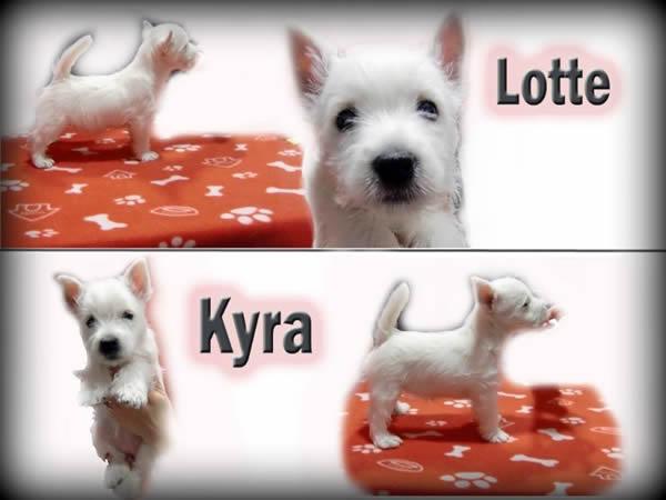 Lotte_Kyra_final